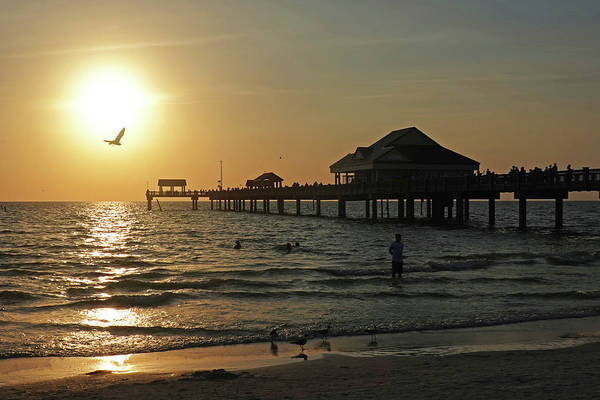 Photograph - Clearwater Florida Sunset At The Pier Fl Seagull by Toby McGuire