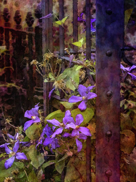 Photograph - Clematis And Iron 4344 Idp_2 by Steven Ward