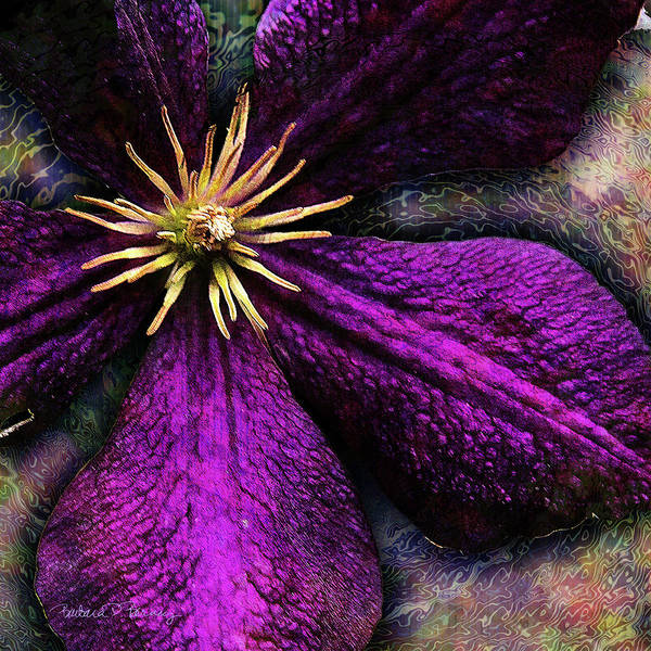 Digital Art - Clematis by Barbara Berney