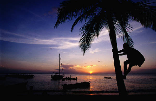 Rigging Photograph - Climbing Coconut Tree At Sunset, Anse by Holger Leue