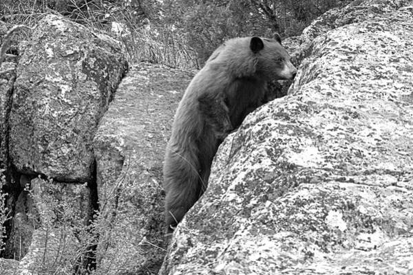 Wall Art - Photograph - Climbing The Cliffs Of Yellowstone Black And White by Adam Jewell