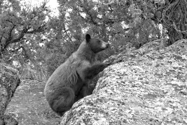 Wall Art - Photograph - Climbing The Yellowstone Cliffs Black And White by Adam Jewell