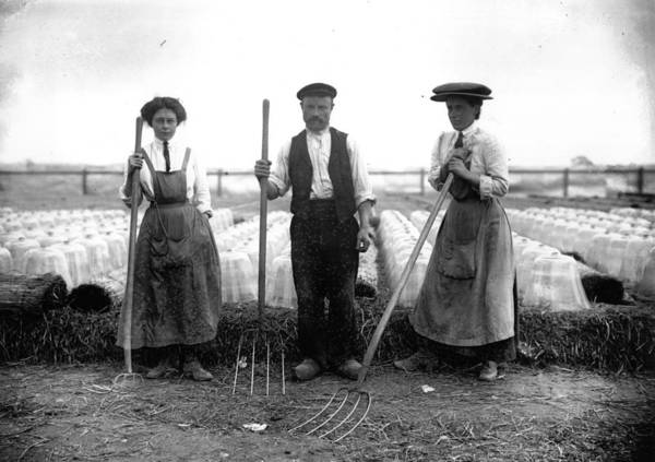 Apron Photograph - Cloche Farming by Topical Press Agency