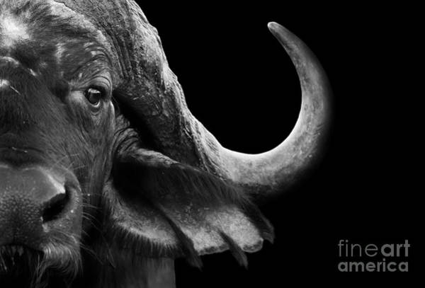 Wall Art - Photograph - Close Up Black And White Image Of An by Donovan Van Staden