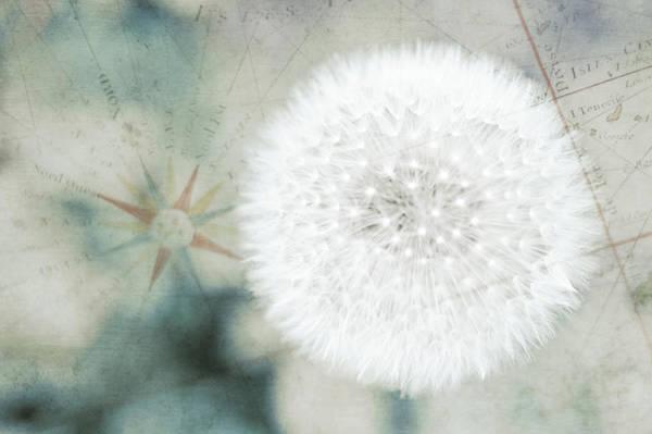 Fragility Photograph - Close Up Capture Of Dandelion Flower by Alexandre Fp