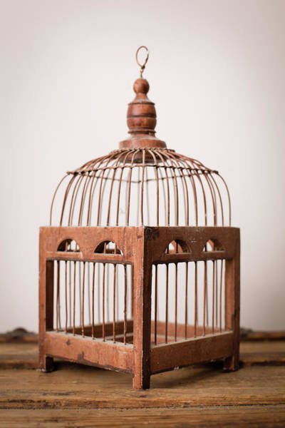 Cage Photograph - Close Up, Color Image Of Vintage Bird by Ideabug