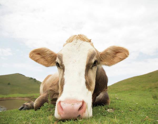 Wall Art - Painting - Close Up I V2 No Cows Crop by Aledanda