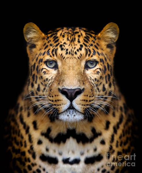 Wall Art - Photograph - Close-up Leopard Portrait On Dark by Volodymyr Burdiak