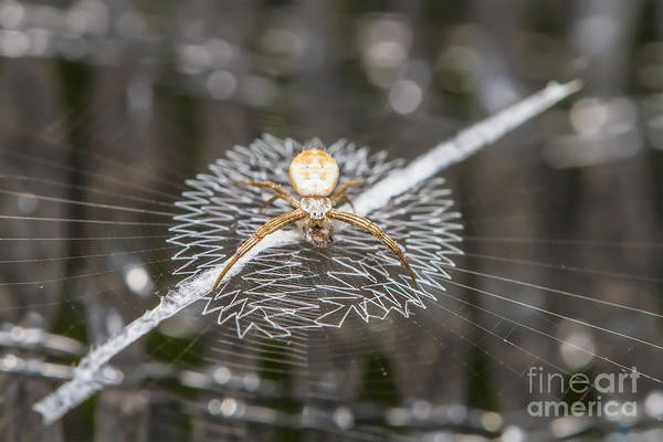Wall Art - Photograph - Close Up Macro Of Spider On Web by Nate Samui