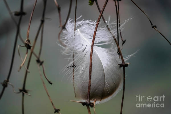 Wall Art - Photograph - Close Up Of A Bird's Feather K3 by Vladi Alon