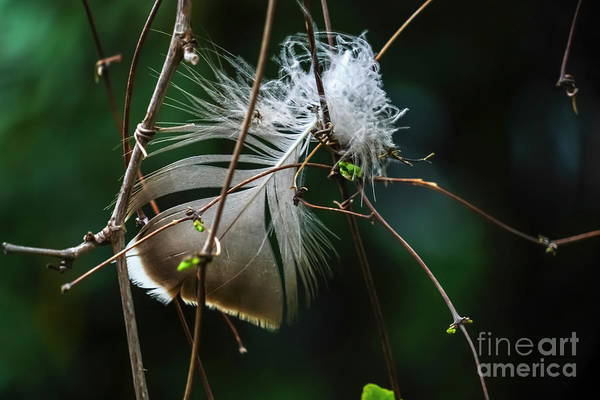 Wall Art - Photograph - Close Up Of A Bird's Feather K4 by Vladi Alon