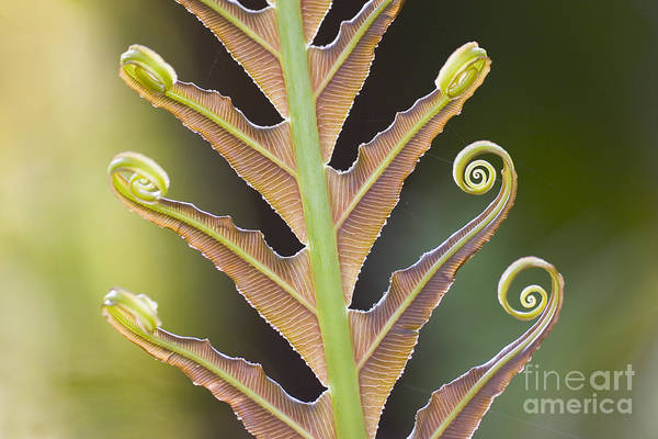 Organic Garden Wall Art - Photograph - Close-up Of A Giant Fern On A Sunny by Artmannwitte