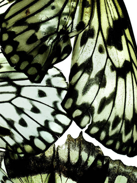 Break Up Photograph - Close Up Of A Moths Broken Wing by Chris Turner