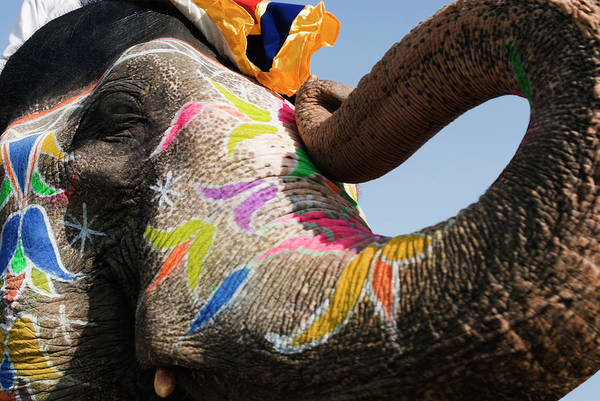 Wall Art - Photograph - Close-up Of A Painted Elephant by Exotica.im