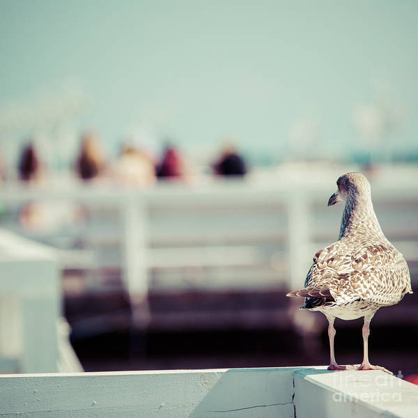 Route Photograph - Close-up Of A Seagull In Sopot Pier by Curioso