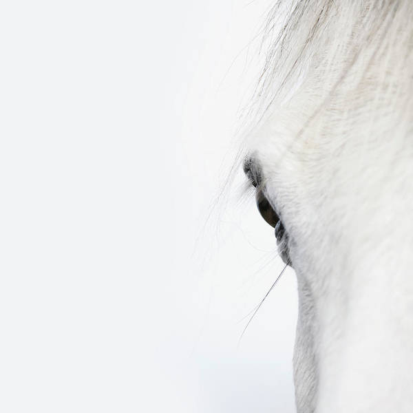 Livestock Photograph - Close Up Of A Welsh Mountain Pony by Andrew Bret Wallis
