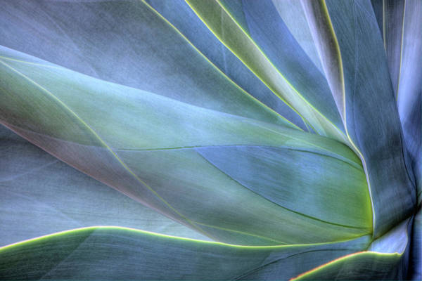 Hawaii Islands Photograph - Close-up Of Agave, Maui, Hawaii, Usa by Gallo Images/danita Delimont