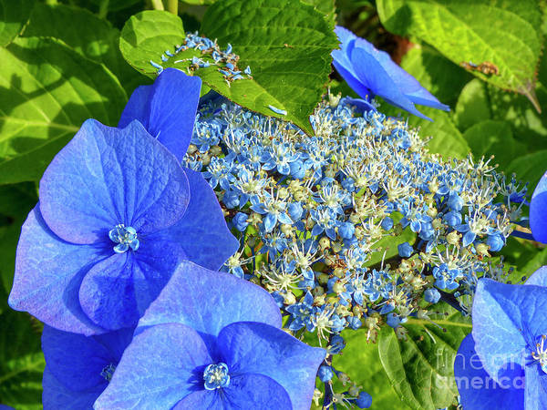 Wall Art - Photograph - Close-up Of Blue Flowers Blooming Outdoors G10 by Dan Yeger