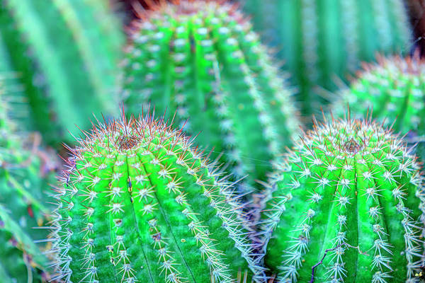 Wall Art - Photograph - Close-up Of Cactus In San Diego by Stuart Westmorland