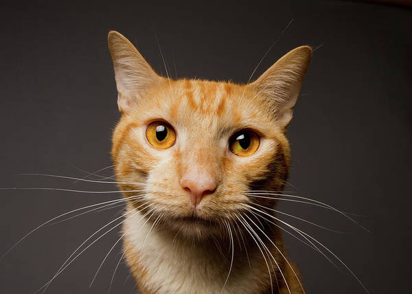 Domestic Dog Photograph - Close-up Of Cat by Square Dog Photography