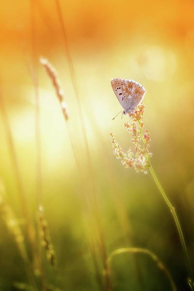 Wing Back Photograph - Close-up Of Colorful Common Blue by Rike