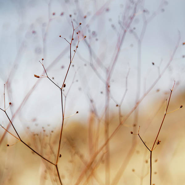 Riverside California Photograph - Close Up Of Dried Desert Flowers In by Mint Images - Paul Edmondson