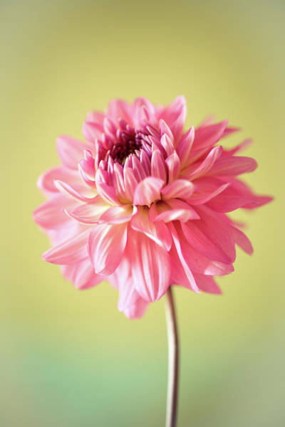 Photograph - Close Up Of Flower by Cyril Couture @