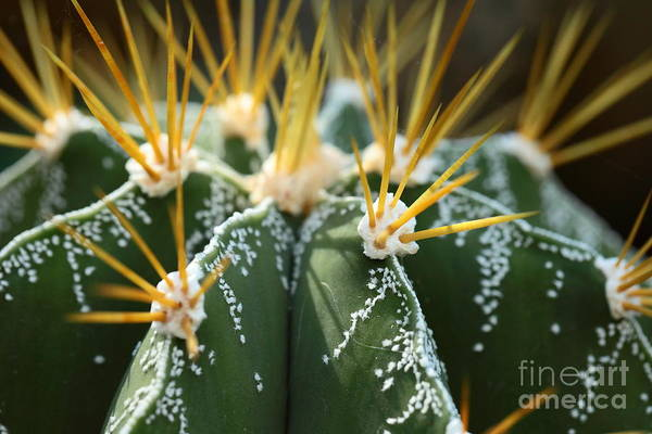 Tropical Plants Photograph - Close Up Of Globe Shaped Cactus With by Curioso