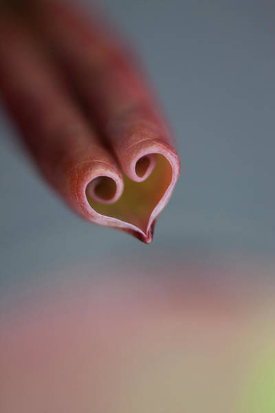 Wall Art - Photograph - Close Up Of Heart Shape Formed By A by Nacivet