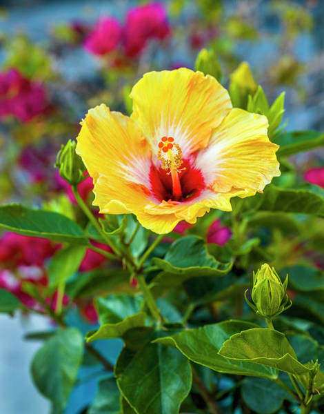 Wall Art - Photograph - Close-up Of Hibiscus Flower by Panoramic Images