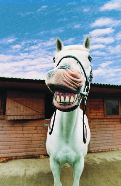 Body Parts Photograph - Close-up Of Horse With Mouth Open by Digital Vision.