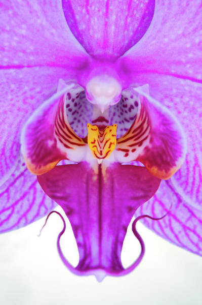 Wall Art - Photograph - Close-up Of Orchid Flowers Stamen by Robert George Young