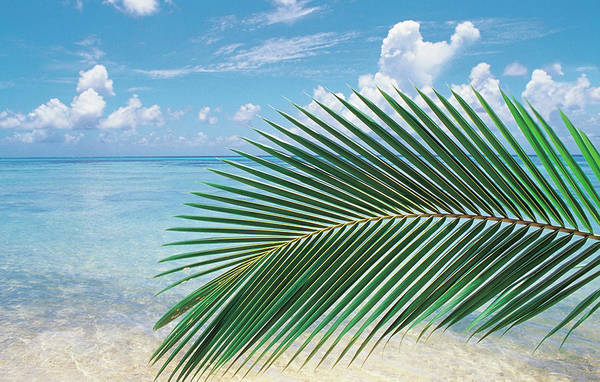 Sunny Side Up Wall Art - Photograph - Close Up Of Palm Leaf With Sea by Panoramic Images