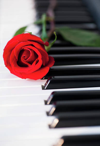 Piano Photograph - Close Up Of Red Rose Lying On Piano Keys by Daniel Grill