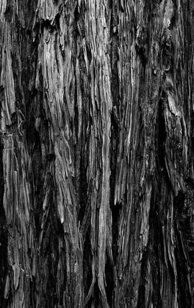 Wall Art - Photograph - Close Up Of Tree Bark, California, Usa by Panoramic Images
