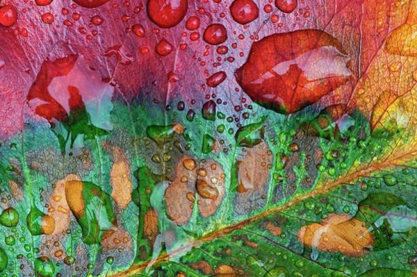 Hardwood Photograph - Close-up Of Wet Autumn Leaf After Rain by Johann  Schumacher