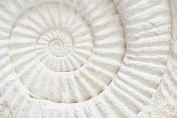 Circular Wall Art - Photograph - Closeup Of An Ammonite Prehistoric by Chatchai Somwat