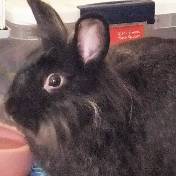 Photograph - Closeup Of Bunny by Denise F Fulmer