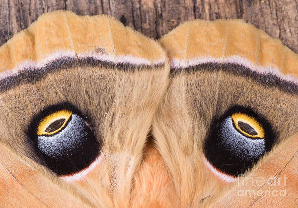 Wall Art - Photograph - Closeup Of The Eyespots On The Wings Of by Charles Brutlag