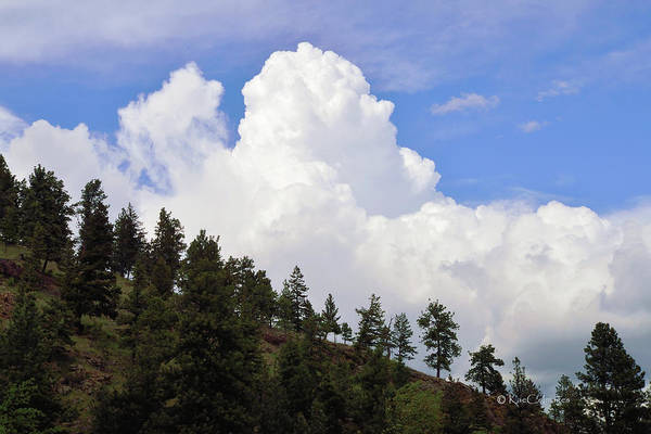 Photograph - Cloud Backdrop For Pine Trees by Kae Cheatham
