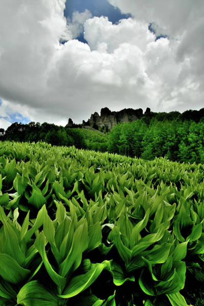 Photograph - Clouds Roil Over Big Cimarron Skunk Cabbage by Ray Mathis