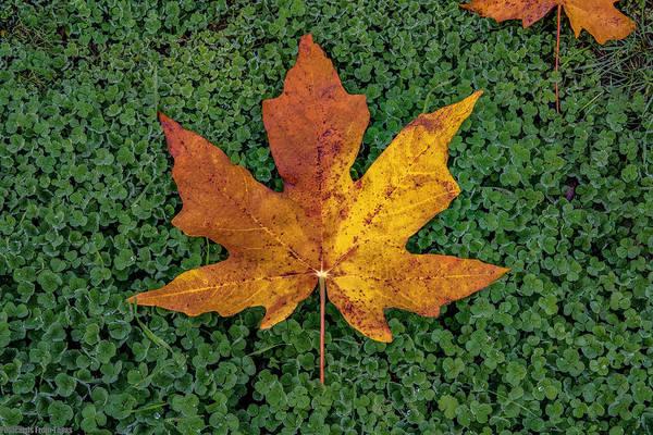 Clover Leaf Autumn Art Print