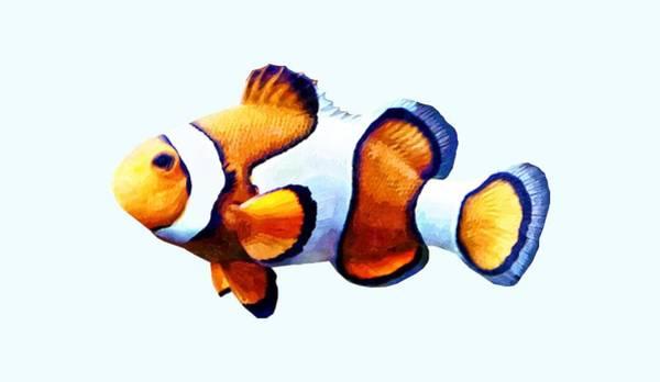 Photograph - Clownfish Cutout by Susan Savad