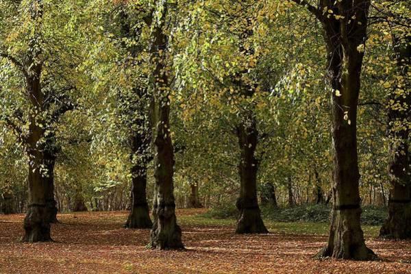 Nottinghamshire Photograph - Clumber Park, Sherwood, Nottingham by Chris Upton