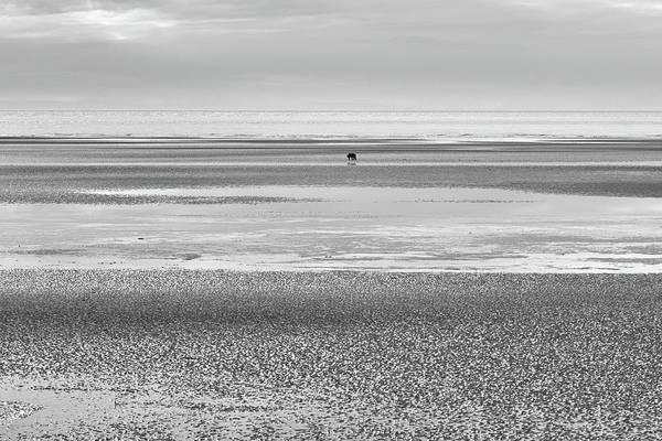 Coastal Brown Bear On  A Beach In Monochrome Art Print