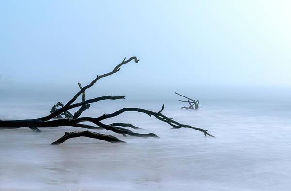 Photograph - Coastal Drift Wood by Tom Singleton