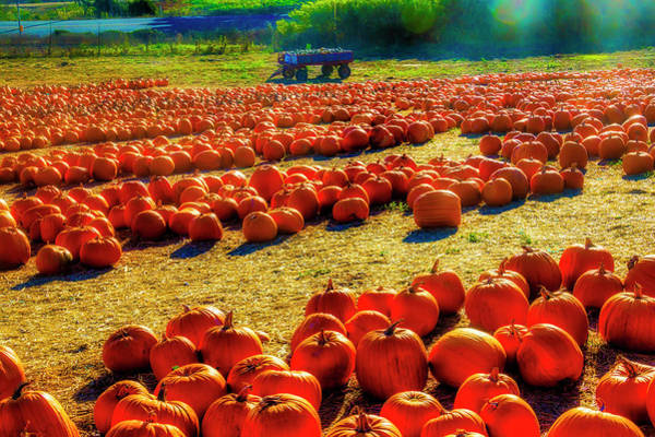 Wall Art - Photograph - Coastal Pumpkin Field by Garry Gay