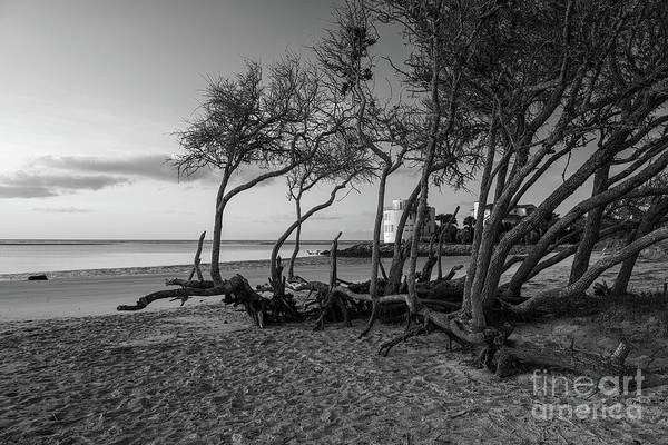 Photograph - Coastal Wind Shaped Beach Tree's by Dale Powell