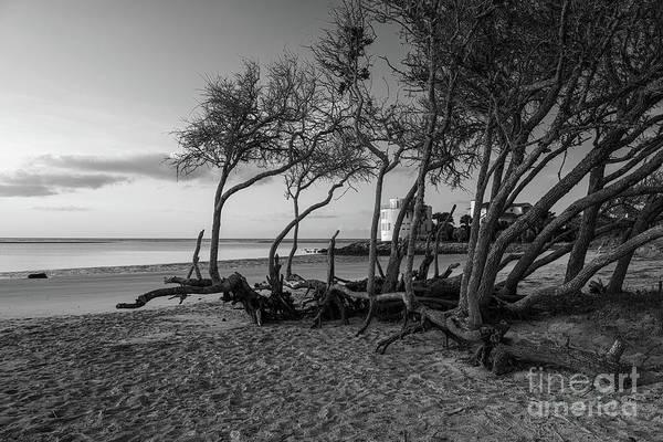 Photograph - Coastal Wind Shaped Beach Tree's by Dale Powell