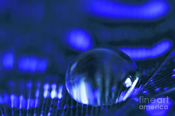 Tracy Hall Wall Art - Photograph - Cobalt Blue Drop by Tracy Hall